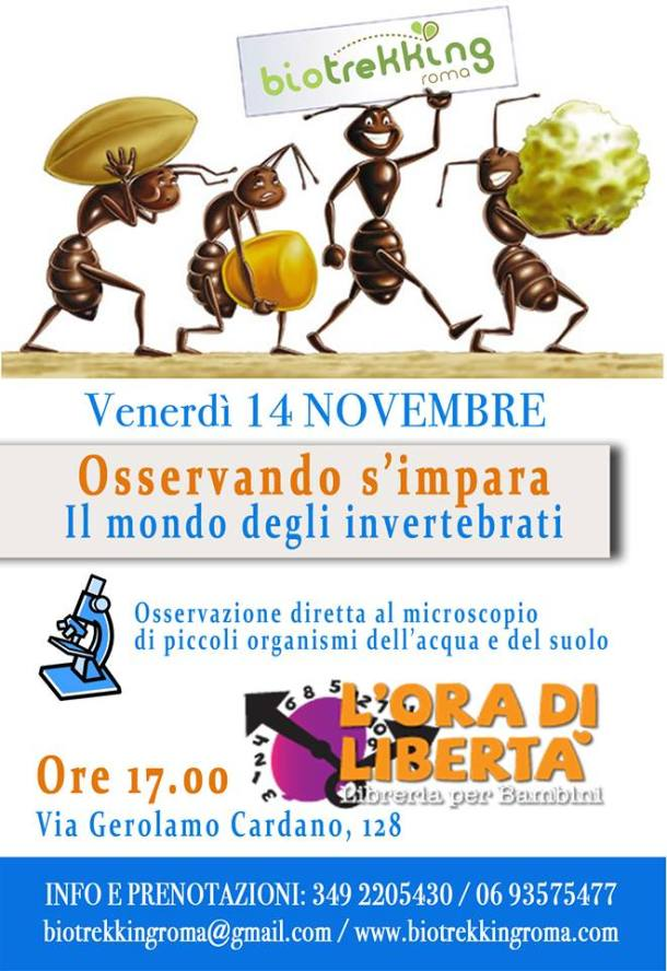 14 novembre_loradiliberta